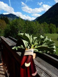 Organic rhubarb for The Alpine Kitchen